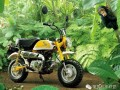 "HONDA""猴子""(1967-2014)经典MINI摩托车"